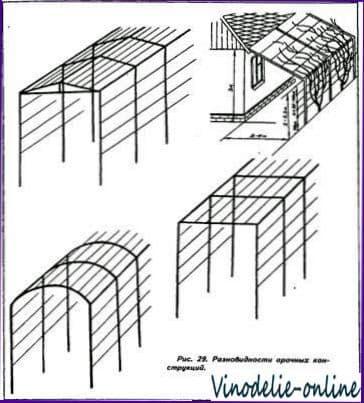 Виноград на арке