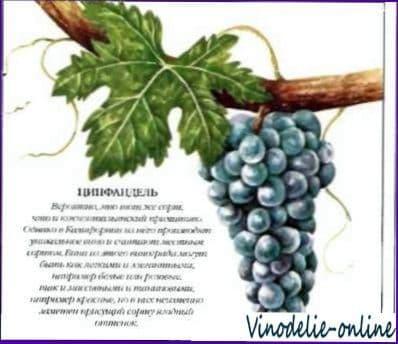 Сорта черного винограда