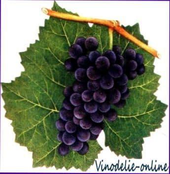 Сорта винограда (международные)