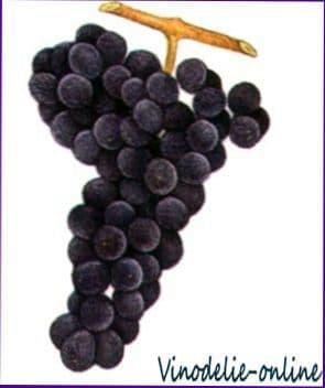 Сорта винограда (региональные)