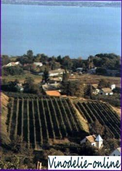 Виноделие в Венгрии