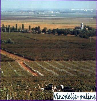 Виноделие в Румынии