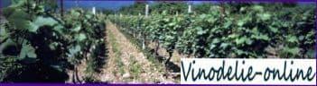 Виноделие в СНГ