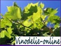 История виноградной лозы
