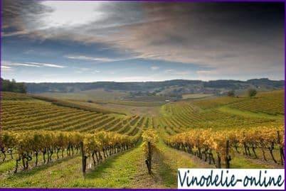 Виноделие во Франции