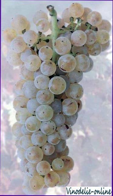 Недостатки вина и дефекты вина