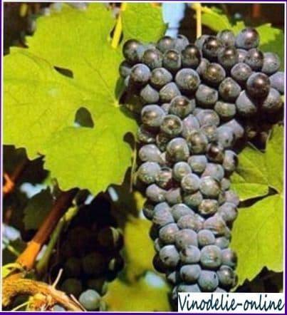 Персидская легенда происхождения вина