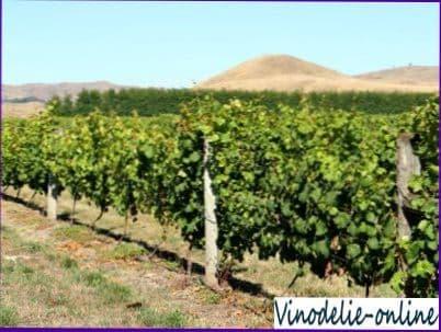Искусство виноградарства