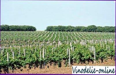 Другие растения на винограднике
