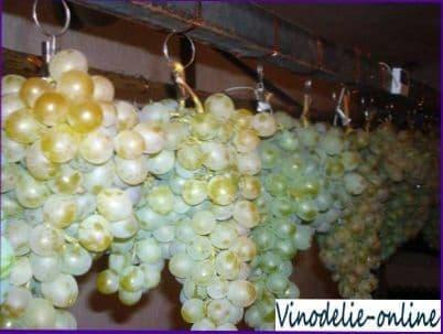 Сбор, хранение и переработка винограда